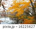 紅葉のポロト湖畔 16225627