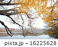 紅葉のポロト湖畔 16225628
