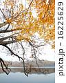 紅葉のポロト湖畔 16225629