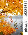 晩秋のポロト湖畔 16225632