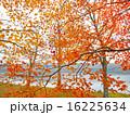紅葉のポロト湖畔 16225634
