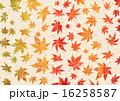 秋色グラデーション 紅葉 テクスチャー 16258587