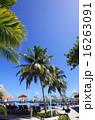 モルディブ ヤシ リゾートアイランドの写真 16263091