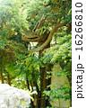 龍神さん 16266810