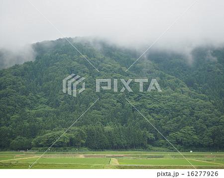 雨上がり山から立ち上る霧と田んぼ 16277926