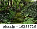 妙法寺 苔の階段 16283726