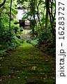 妙法寺 苔の階段 16283727