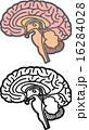 脳 16284028