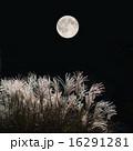 満月とススキ 16291281