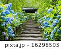 明月院 山門 紫陽花 16298503
