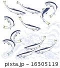 アユのイラストレーション 16305119