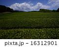 茶畑 16312901