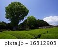茶畑 16312903