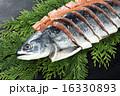 鮭 16330893