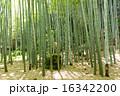 報国寺 鎌倉 竹林の写真 16342200
