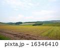 美瑛町 農地 風景の写真 16346410