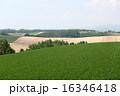 美瑛町 農地 風景の写真 16346418