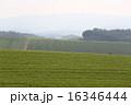 美瑛町 農地 風景の写真 16346444