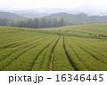 美瑛町 農地 風景の写真 16346445