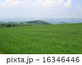 美瑛町 農地 風景の写真 16346446