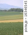 美瑛町 農地 風景の写真 16346545