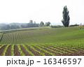農地 美瑛町 風景の写真 16346597