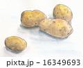 農産物 ジャガイモ 芋のイラスト 16349693