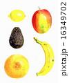 フルーツ 16349702