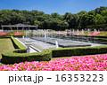 神代植物園 16353223