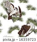 日本画 鷹に松 16359723