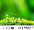 植物の芽生え 16376627
