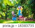 遊ぶ 造園 秋の写真 16383735