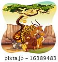 ライオン キリン ヘビのイラスト 16389483