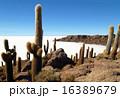 ウユニ塩湖 サボテン 塩湖の写真 16389679