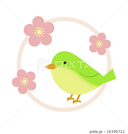 ウグイスと梅の花のイラスト素材 16390721 Pixta