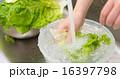 洗う ボウル 炊事の写真 16397798