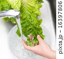 洗う ボウル 炊事の写真 16397806