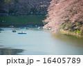 千鳥ヶ淵の桜 16405789