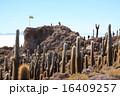 魚の島 ウユニ サボテンの写真 16409257