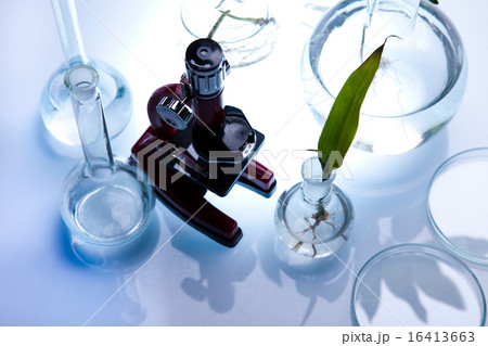 Laboratory glassware, genetically modified plantの写真素材 [16413663] - PIXTA