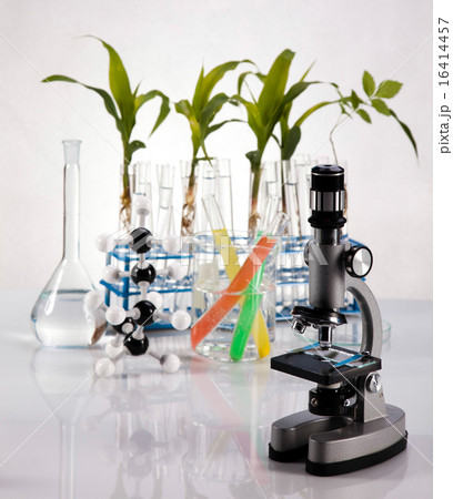 Plant in a test tube in hands of the scientistの写真素材 [16414457] - PIXTA