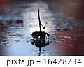 反映 写り 影の写真 16428234