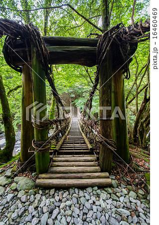 徳島県 奥祖谷二重かずら橋 女橋...