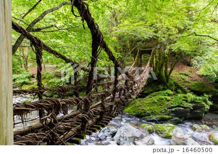 徳島県 奥祖谷二重かずら橋 16460500