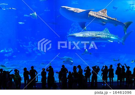 美ら海水族館 ジンベイザメ 16461096