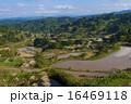 田 段々畑 水田の写真 16469118
