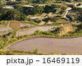田 段々畑 水田の写真 16469119