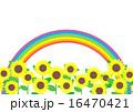 向日葵畑 花 虹のイラスト 16470421