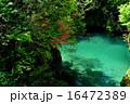 仁淀川支流の清冽な水とひかり 16472389