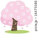 桜 16475086